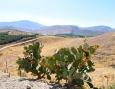 Cactus opuntia (Tzabar en hebreo)