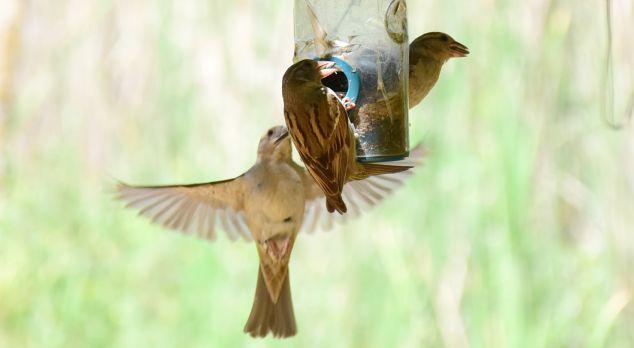 aves de Israel